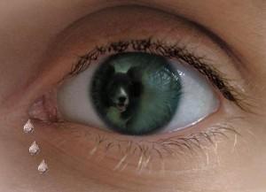 Buntzu in een oog  1
