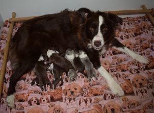 2016-12-05-lila-en-haar-pupjes-5